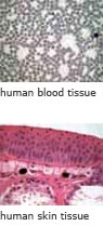 human blood tissue and human skin tissue
